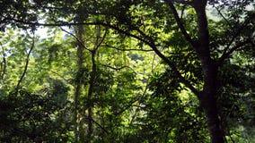Passeggiata della giungla alla cascata Baguite Fotografie Stock