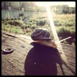 Una passeggiata di mattina delle lumache Fotografie Stock