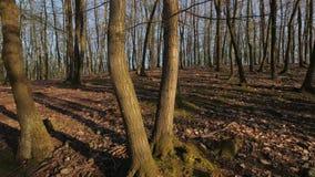 Passeggiata della molla della foresta archivi video