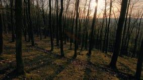 Passeggiata della molla della foresta stock footage