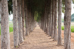 Passeggiata della natura Fotografia Stock