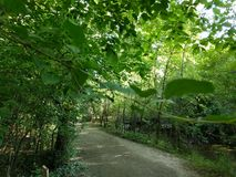 Passeggiata della natura del parco di Sertoma immagine stock