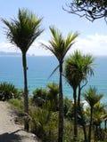 Passeggiata della scogliera di Mangawhai: vista del mare degli alberi di nikau Fotografie Stock Libere da Diritti