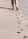 Passeggiata della spiaggia Fotografia Stock
