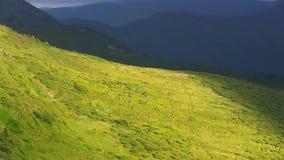 Passeggiata delle pecore sulle colline stock footage