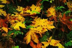 Passeggiata di autunno lungo la gola di Colombia Fotografia Stock Libera da Diritti
