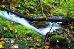 Passeggiata di autunno lungo la gola di Colombia Immagini Stock