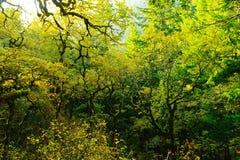 Passeggiata di autunno lungo la gola di Colombia Fotografie Stock Libere da Diritti