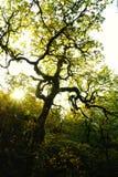 Passeggiata di autunno lungo la gola di Colombia Fotografia Stock
