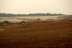 Passeggiata di autunno nel campo e nella foresta Fotografia Stock