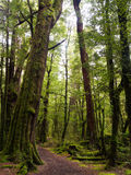 Passeggiata di Gunn Nature del lago nella foresta del faggio immagini stock libere da diritti