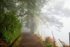 Passeggiata di Levada attraverso la foresta dell'alloro sull'isola del Madera, Portogallo Immagini Stock Libere da Diritti