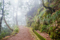 Passeggiata di Levada attraverso la foresta dell'alloro sull'isola del Madera, Portogallo Immagine Stock