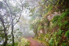 Passeggiata di Levada attraverso la foresta dell'alloro sull'isola del Madera, Portogallo Fotografia Stock