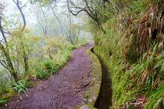 Passeggiata di Levada attraverso la foresta dell'alloro sull'isola del Madera, Portogallo Fotografie Stock
