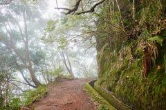 Passeggiata di Levada attraverso la foresta dell'alloro sull'isola del Madera, Portogallo Fotografie Stock Libere da Diritti