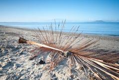 Passeggiata di mattina alla spiaggia Fotografia Stock