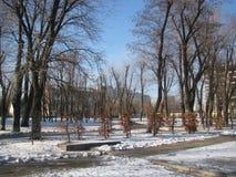 Passeggiata di pomeriggio di inverno nel parco della città immagine stock