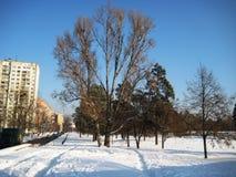 Passeggiata di pomeriggio di inverno nel parco della città immagine stock libera da diritti