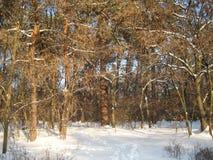 Passeggiata di pomeriggio di inverno nel parco della città fotografia stock libera da diritti