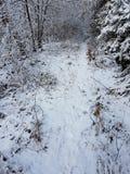 Passeggiata di Snowy Fotografie Stock