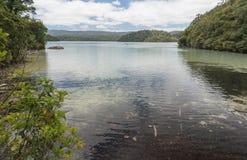 Passeggiata di Waikareiti del lago Te Urewera National Park Immagini Stock