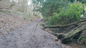 Passeggiata fangosa del terreno boscoso tramite la corrente Fotografie Stock Libere da Diritti