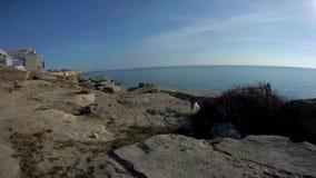 Passeggiata lungo la spiaggia video d archivio