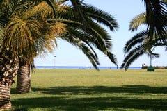 Passeggiata mediterranea delle palme Fotografia Stock Libera da Diritti