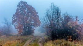 Passeggiata nebbiosa sulla collina Immagine Stock
