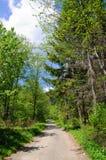 Passeggiata nel bosco Fotografie Stock Libere da Diritti