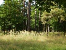 passeggiata nel bosco di giorno di estate sopra alta erba densa Fotografia Stock