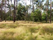passeggiata nel bosco di giorno di estate sopra alta erba densa Fotografie Stock