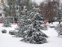 passeggiata nel parco della città nel pomeriggio di inverno agli alberi innevati fotografie stock