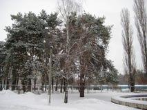 passeggiata nel parco della città nel pomeriggio di inverno agli alberi innevati fotografia stock