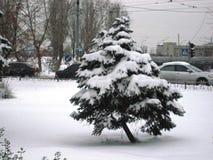 passeggiata nel parco della città nel pomeriggio di inverno agli alberi innevati immagine stock