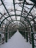 Passeggiata nel Peterhof fotografia stock