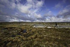 Passeggiata nella tundra Fotografia Stock Libera da Diritti