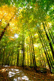 Passeggiata soleggiata attraverso il legno Immagini Stock Libere da Diritti