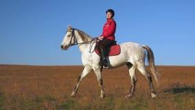 Passeggiata sull'amazzone di equitazione del prato inglese Movimento lento Vista laterale stock footage