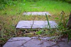 Passeggiata sull'erba Fotografia Stock