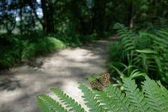 Passeggiate del terreno boscoso Fotografie Stock Libere da Diritti