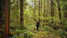 Passeggiate dell'uomo che fanno un'escursione la foresta della montagna della cascata dell'Oregon di legni video d archivio