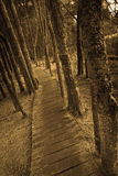 Passeio à beira mar Fotos de Stock Royalty Free