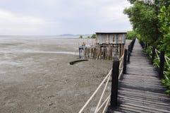 Passeio à beira mar da floresta dos manguezais Fotos de Stock Royalty Free