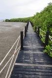 Passeio à beira mar da floresta dos manguezais Imagens de Stock
