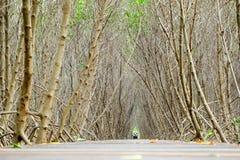 Passeio à beira mar da floresta dos manguezais Foto de Stock Royalty Free