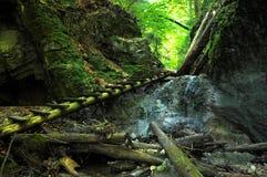 Passeio à beira mar da floresta no paraíso de Eslováquia Imagens de Stock Royalty Free