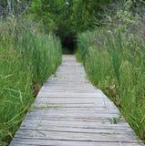 Passeio à beira mar da região pantanosa Imagem de Stock Royalty Free
