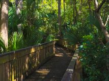 Passeio à beira mar de HDR na floresta de Florida Foto de Stock Royalty Free